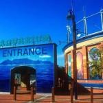 two-oceans-aquarium-awarded-platinum-status
