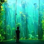 two-oceans-aquarium-awarded-platinum-status2