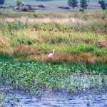 sa-programmes-to-protect-the-wetlands