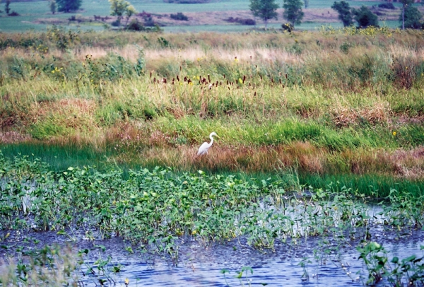 sa-programmes-to-protect-the-wetlands