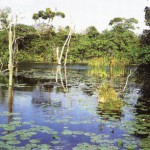 lifeline-of-a-healthy-ecosystem-world-wetlands-day