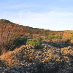 protecting-our-fynbos-video