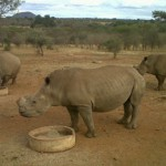 a-different-way-of-thinking-about-rhino-poaching?