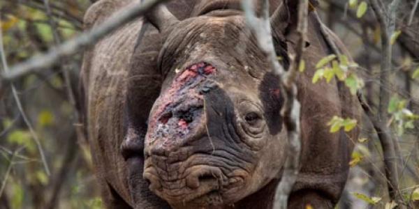 save-the-rhinos
