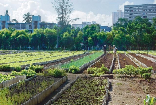 cubas-organic-food-revolution-flourishing