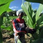 zimbabwe-faces-1mn-tonne-maize-deficit