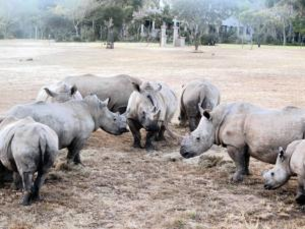 new-rhino-laws-gazetted