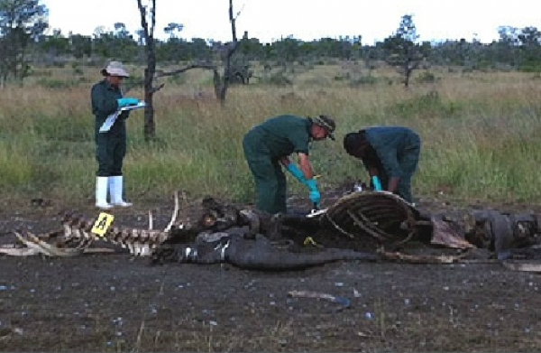 sa-speaks-to-vietnam-over-rhino-hunting