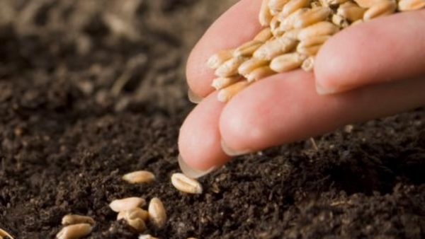 seeds-are-the-key-to-a-gmo-free-food-future