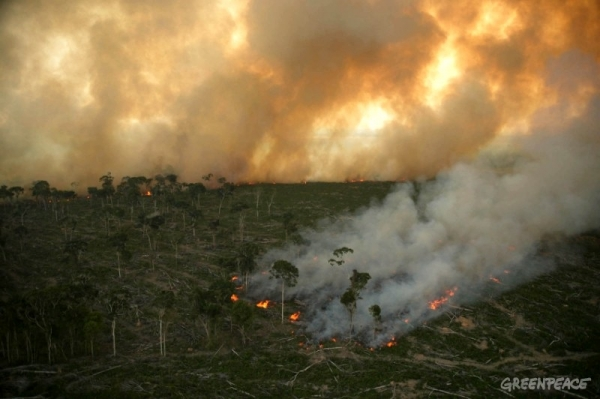 deforestation-why-you-need-to-stop-it