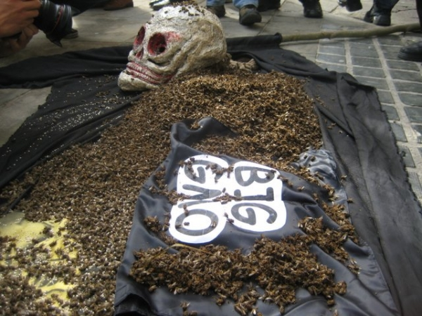 beekeepers-win-ban-on-polands-monsanto-gmos