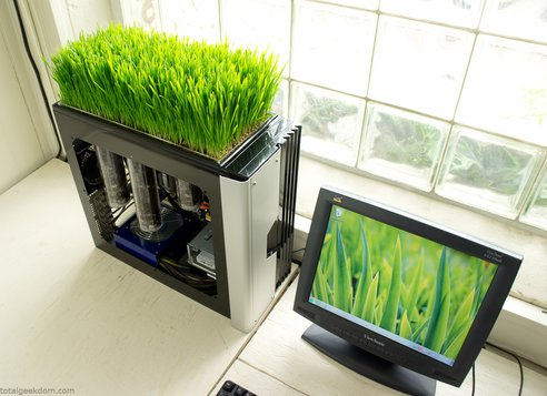 computer-growing-wheatgrass
