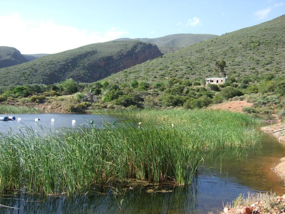 organic pioneers - olive farming2