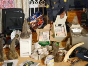 rhino poaching - big bust2