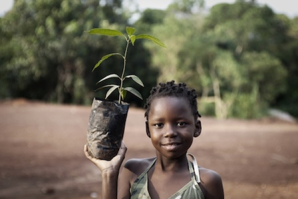 trees-for-zambia-to-inspire-a-culture-of-tree-planting