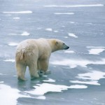 stars-recruited-in-bid-to-save-the-arctic