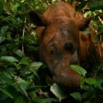 international-year-of-the-rhino-begins