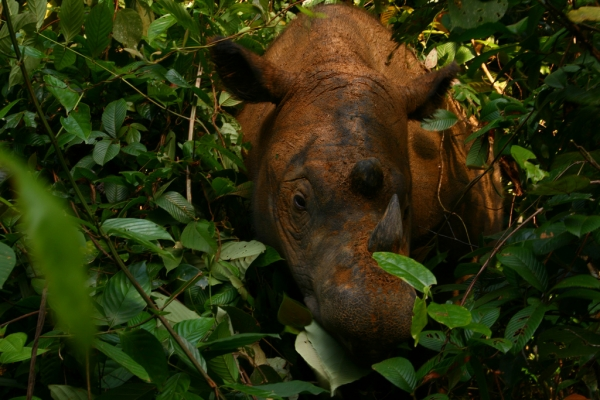 international-year-of-the-rhino-begins