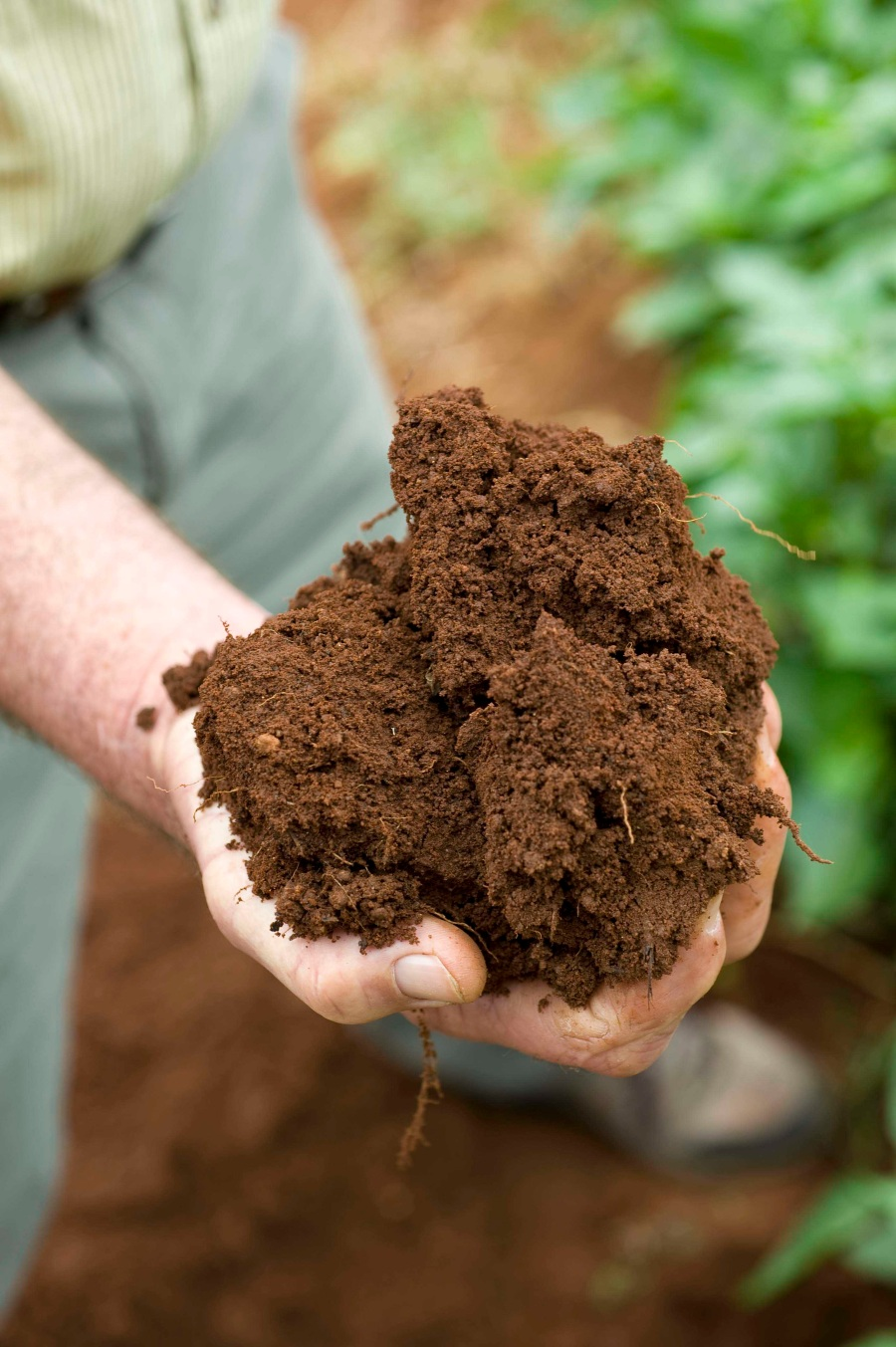 woolworths customers - hands with soil