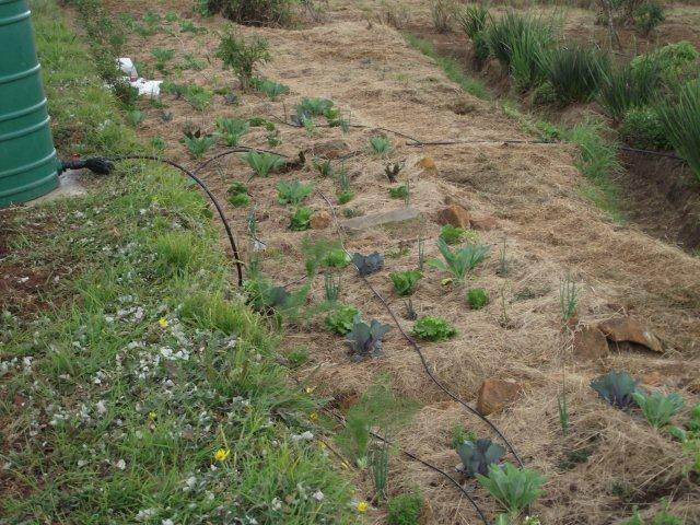 Woza Moya Project - gravity-fed drip irrigation into main Woza Moya veg gardens