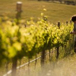 wine-drinkers-help-protect-cape-environment