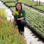 helping-fynbos-nurseries-to-grow