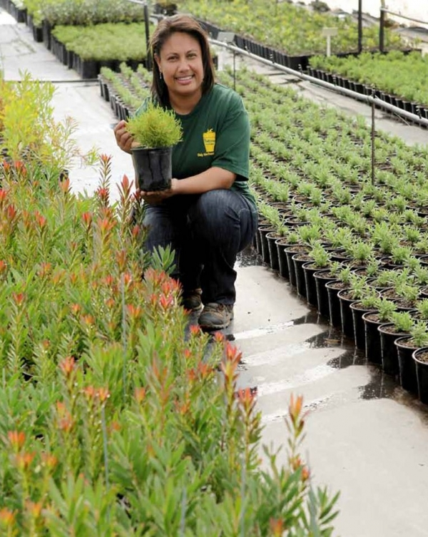 helping-fynbos-nurseries-to-grow