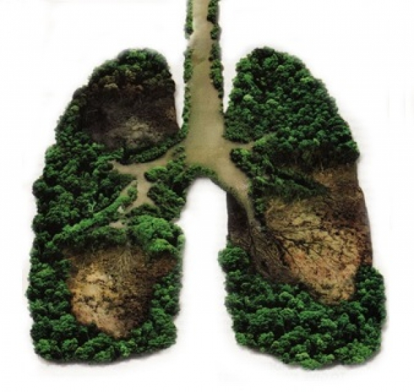 green-lungs-help-us-breathe-better