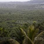 new-york-investors'-big-african-land-grab-exposed