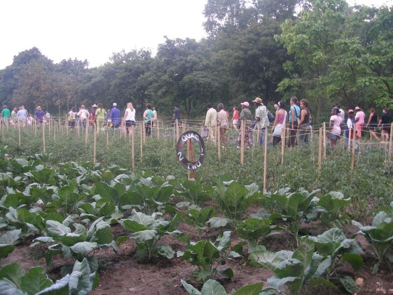 Detroit Community Garden