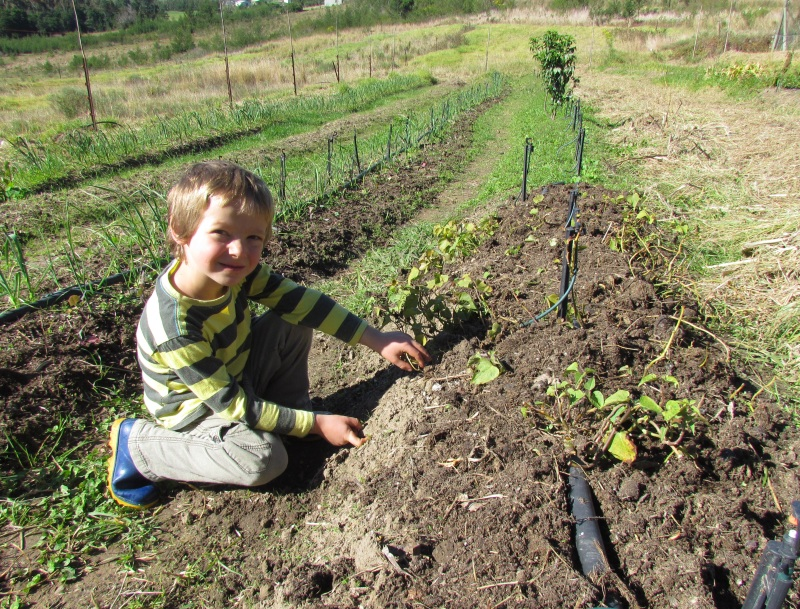budding organic farmer