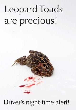 leopard toads are precious