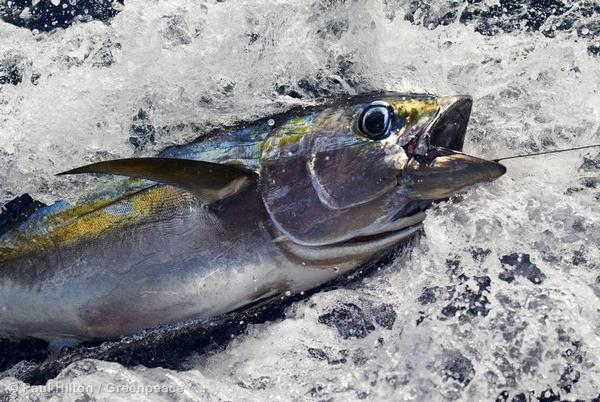 rainbow-warrior-in-key-tuna-hub-mauritius
