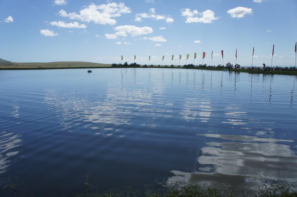 daisies07 lake