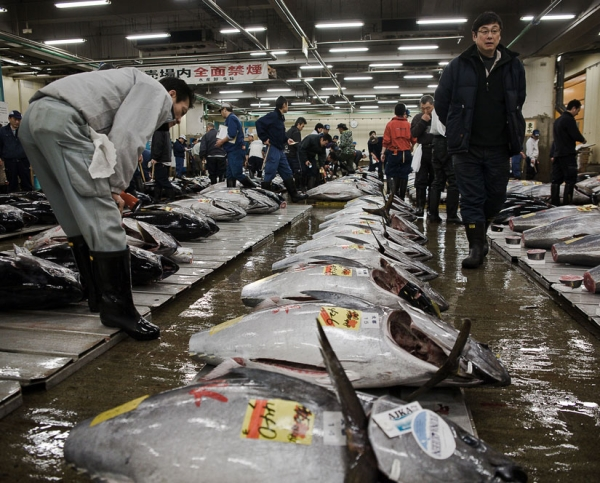 avoid-pacific-bluefin-tuna-radioactive-or-not