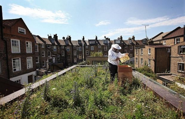 bee-attacks-raise-concerns-about-city-beekeeping