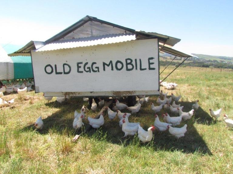 Angus famous egg mobile