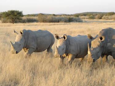 rhino slaughter