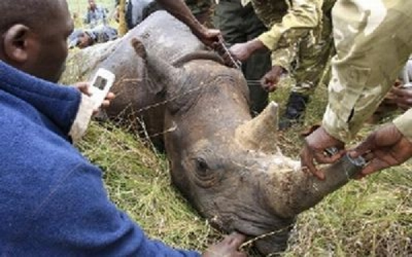 clamping-down-on-rhino-terror-army-might-be-next