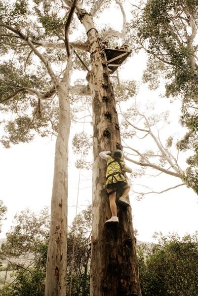 Camp Africa - tree climber