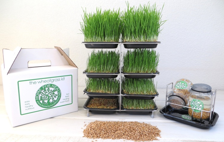 Home for Health Wheatgrass Kit
