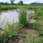 why-wetlands-matter