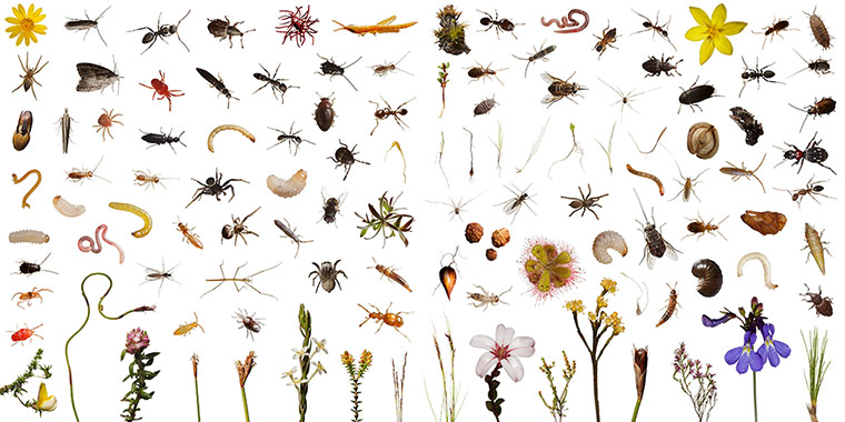 a-world-in-one-cubic-foot-insects