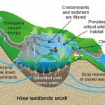 play-a-role-in-protecting-wetlands-this-year