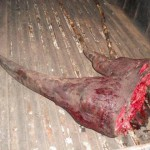 rhino-trade-implicated-in-deaths