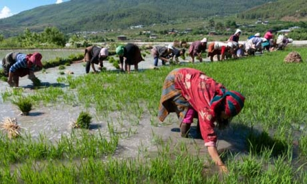 bhutan-aims-to-be-first-100-organic-nation