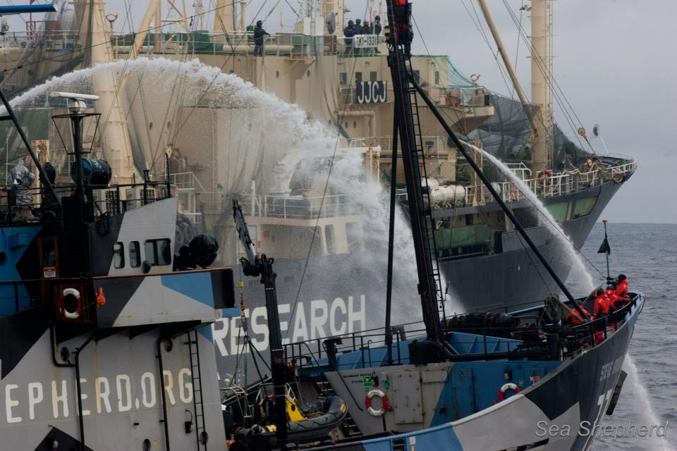 Sea Shepherd clashes with Japanese whaling ships
