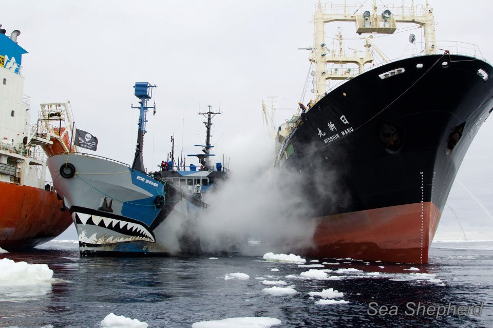 Sea Shepherd clashes with Japanese whaling ships2