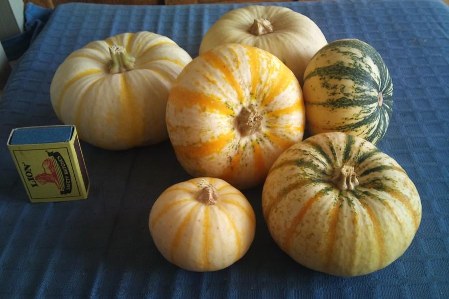 organic column - pumpkins