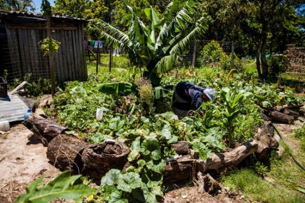 growing-your-own-sustainable-food-forest